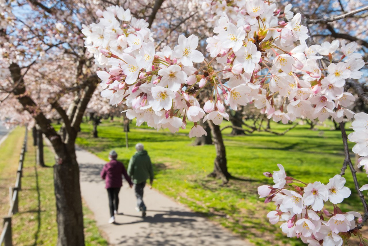 Hagley Park in Spring