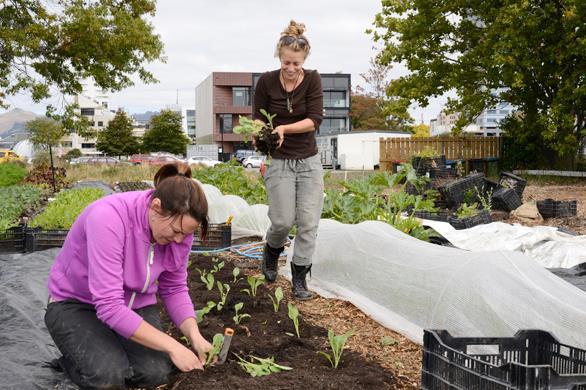 Cultivate Christchurch