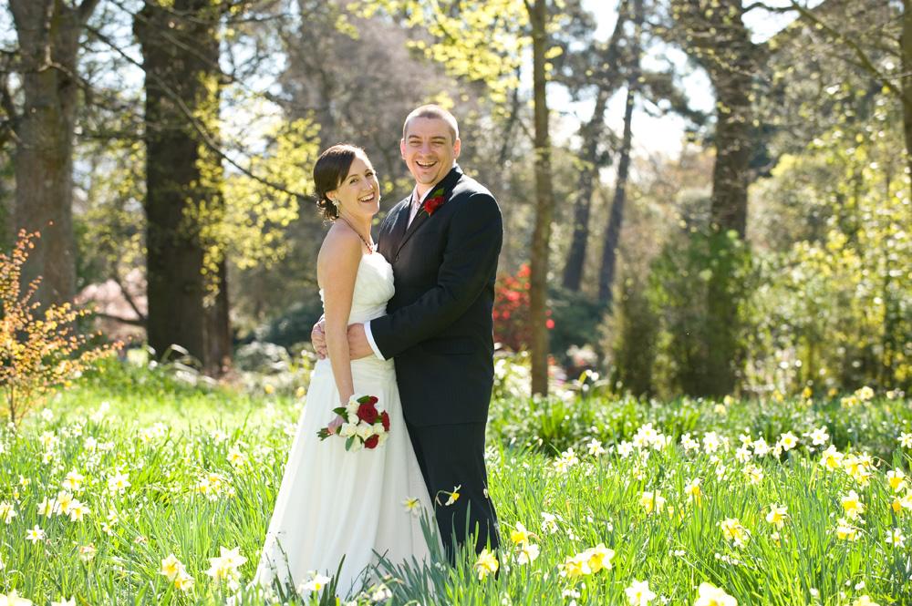Daffodil Woodland