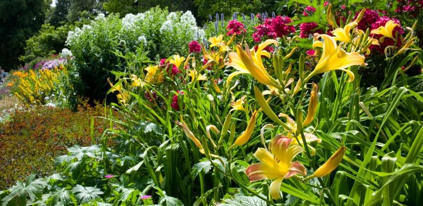 'Herbaceous Border