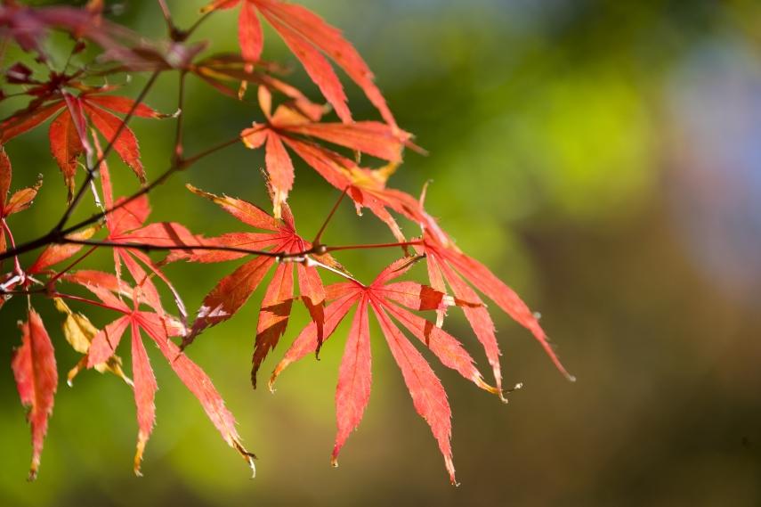 Autumn leaf display