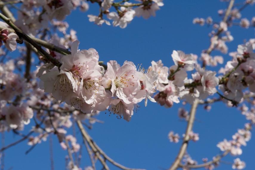 'Blossoms