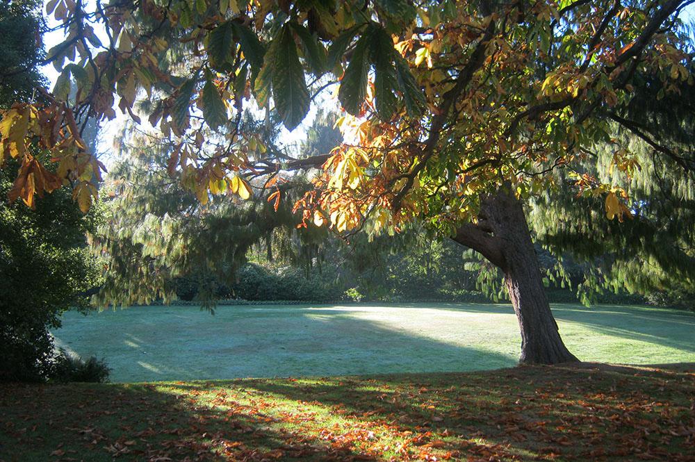 Mound Lawn